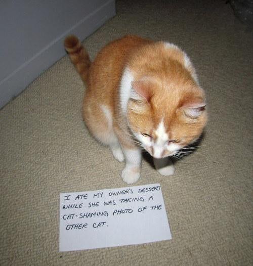 cat-shaming-39