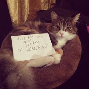 cat-shaming-41