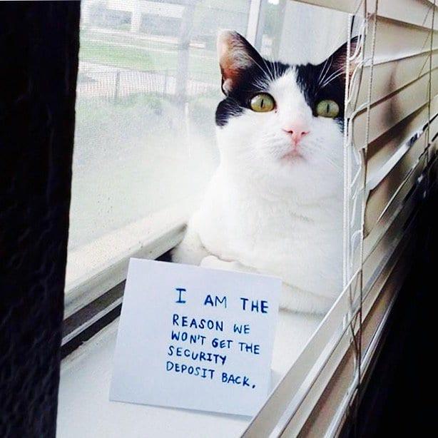 cat-shaming-42