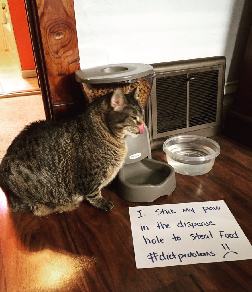cat-shaming-43