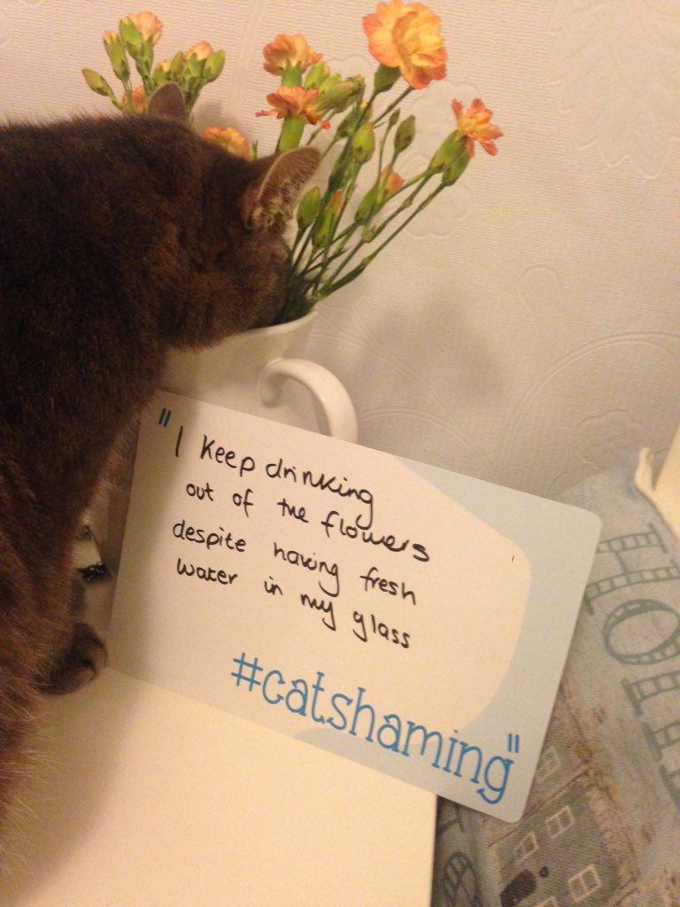 cat-shaming-44