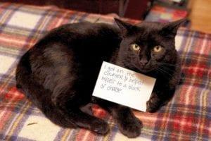 cat-shaming-46