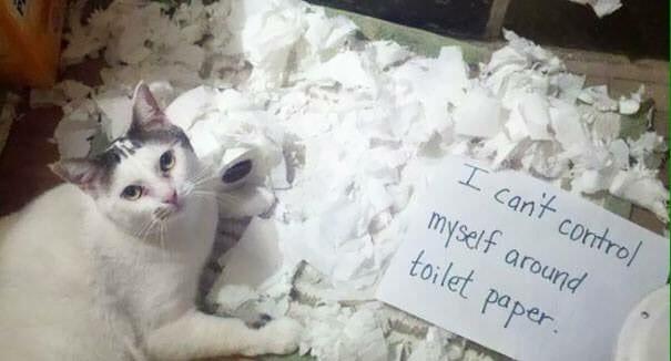 cat-shaming-48