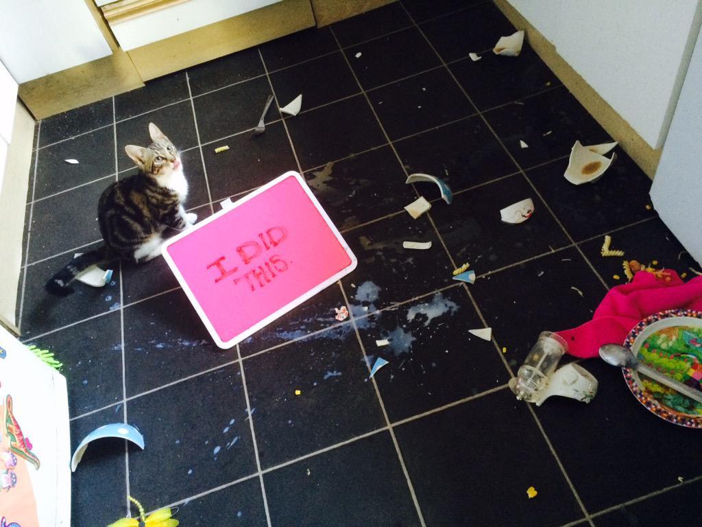 cat-shaming-49
