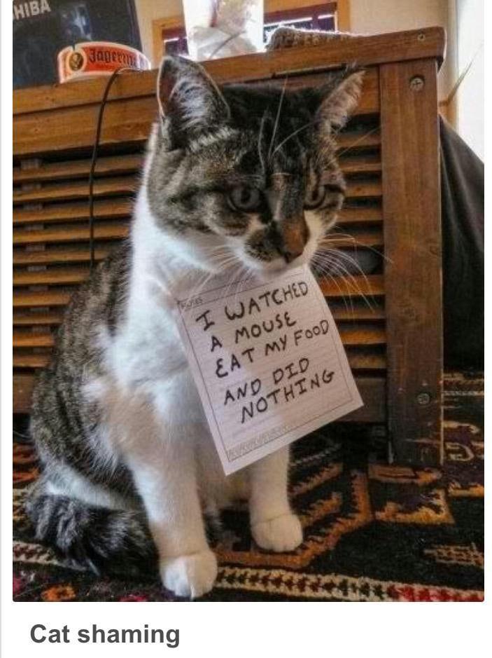 cat-shaming-51