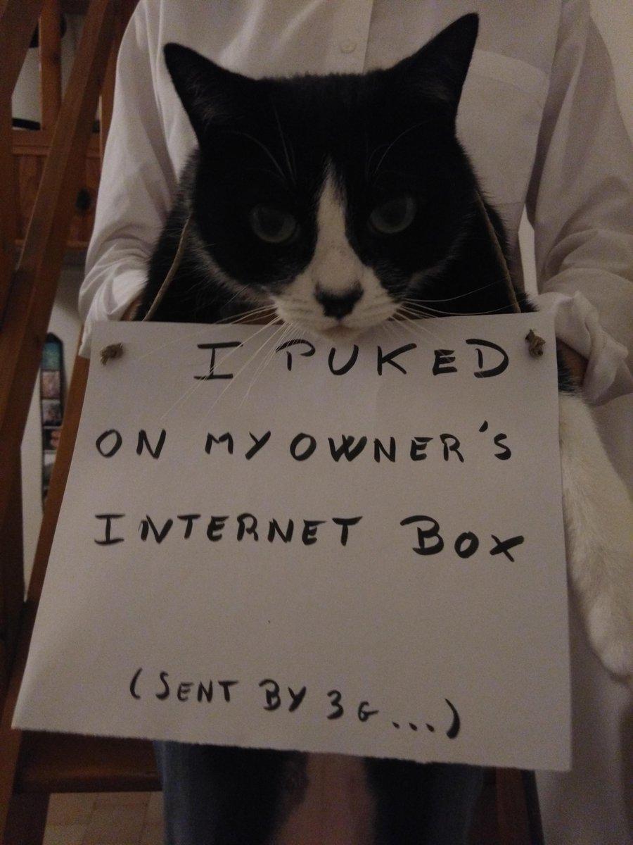 cat-shaming-52