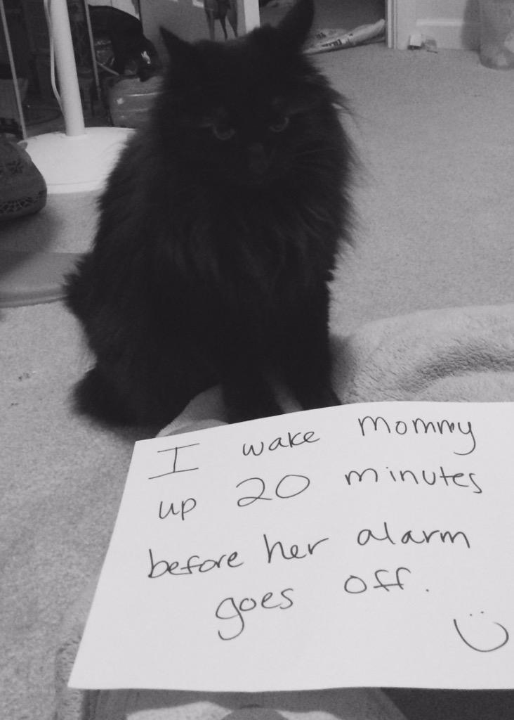 cat-shaming-54