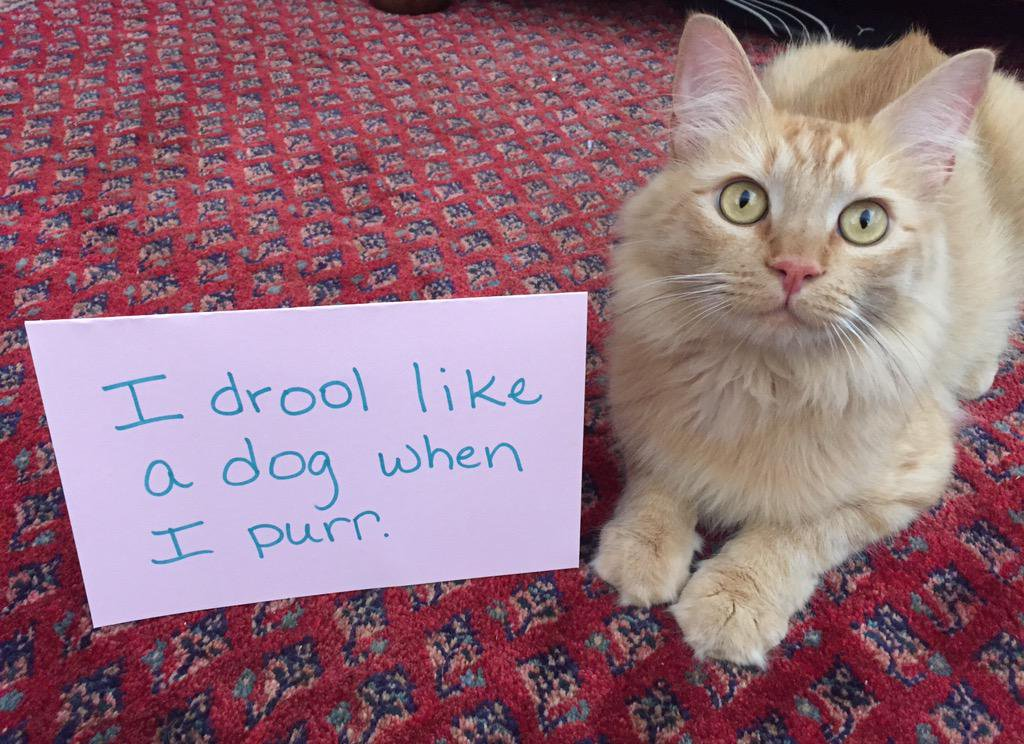 cat-shaming-58