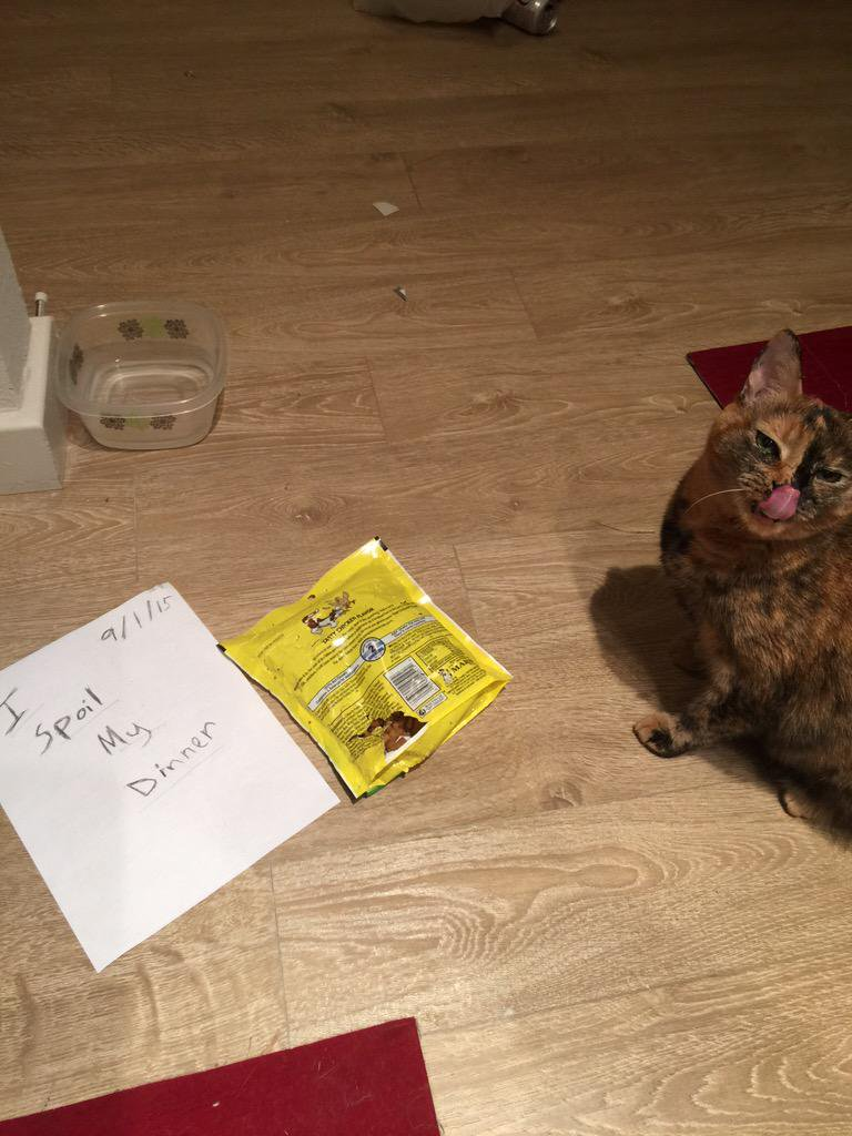 cat-shaming-59