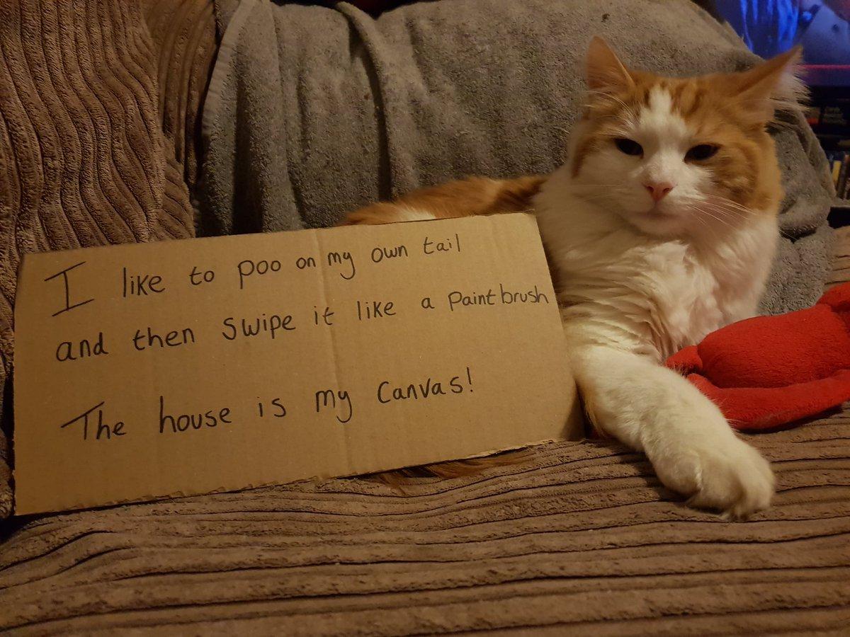 cat-shaming-6