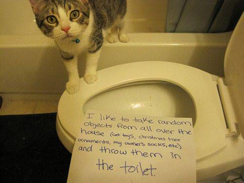 cat-shaming-60
