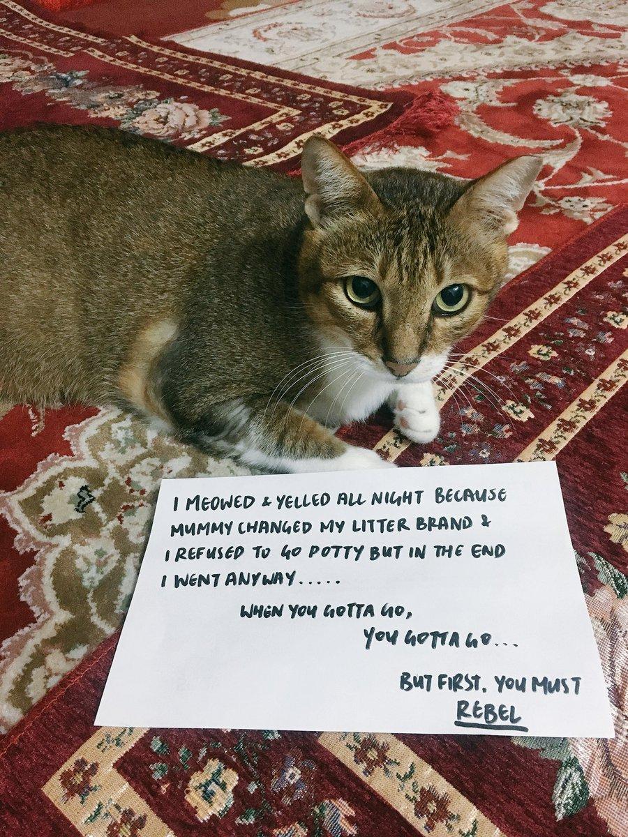 cat-shaming-61