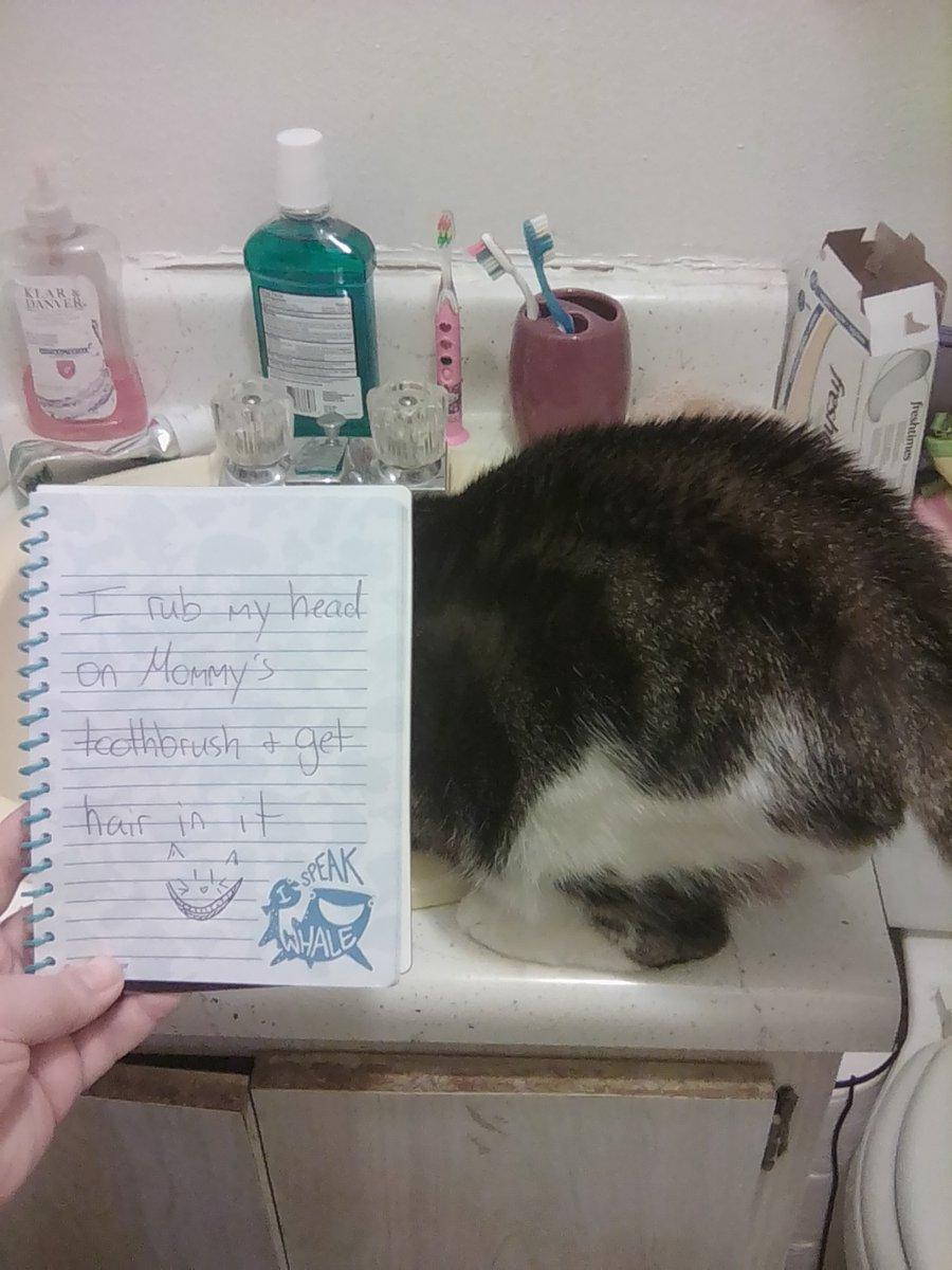 cat-shaming-63