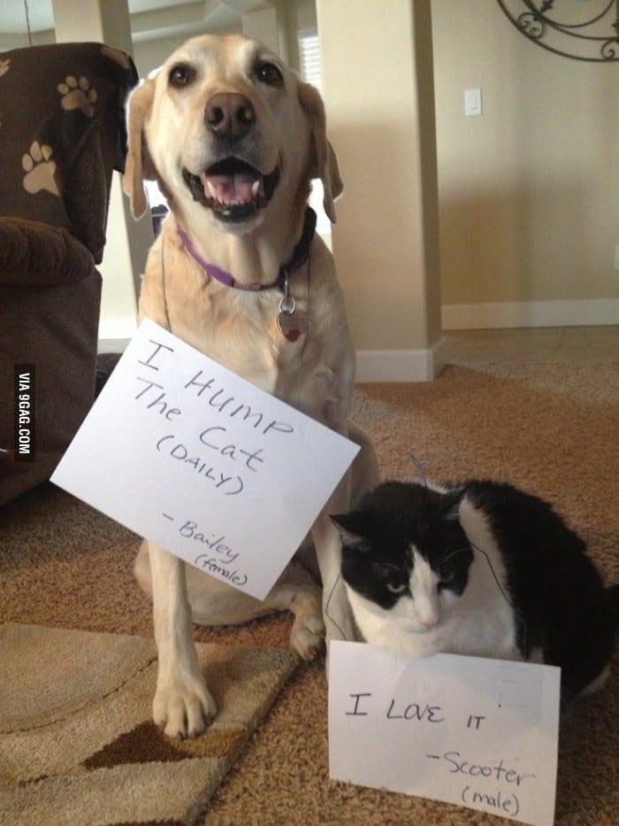 cat-shaming-65