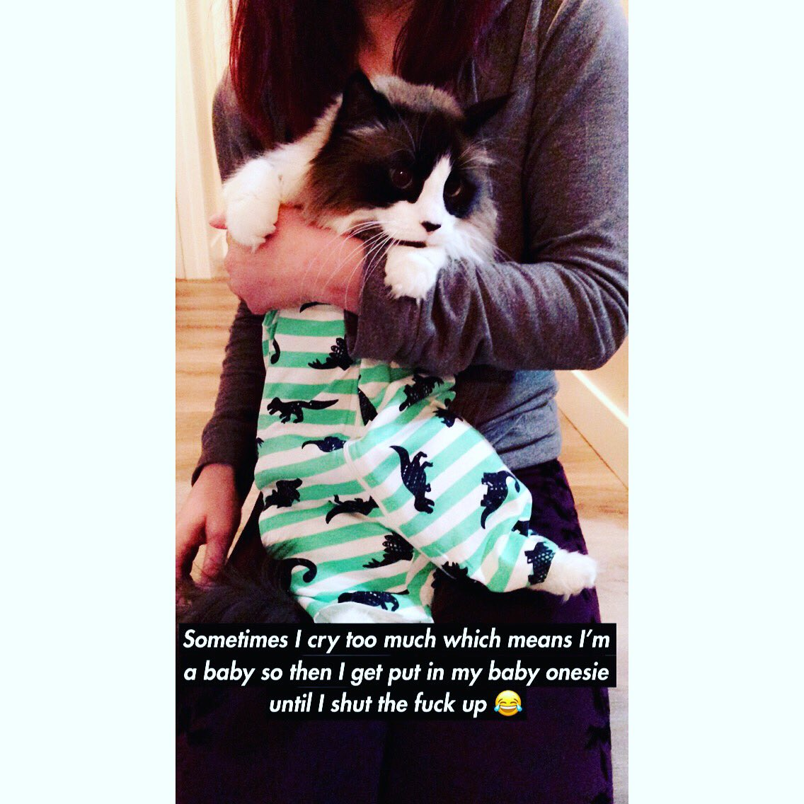 cat-shaming-66