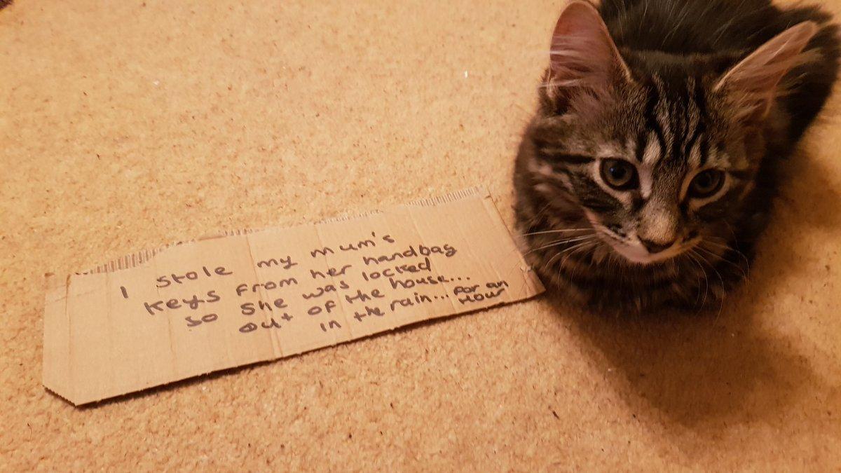 cat-shaming-68