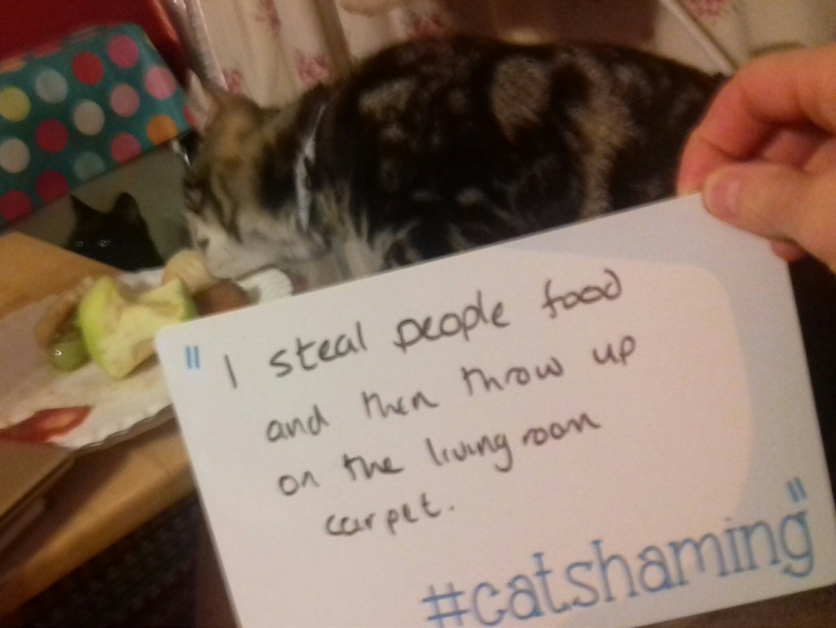 cat-shaming-7