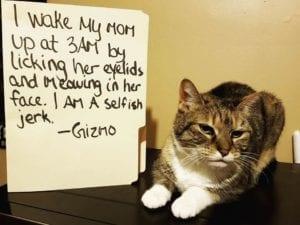 cat-shaming-70