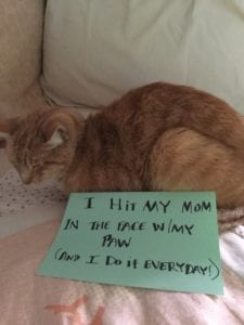 cat-shaming-71