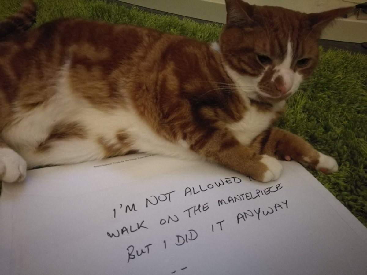 cat-shaming-72