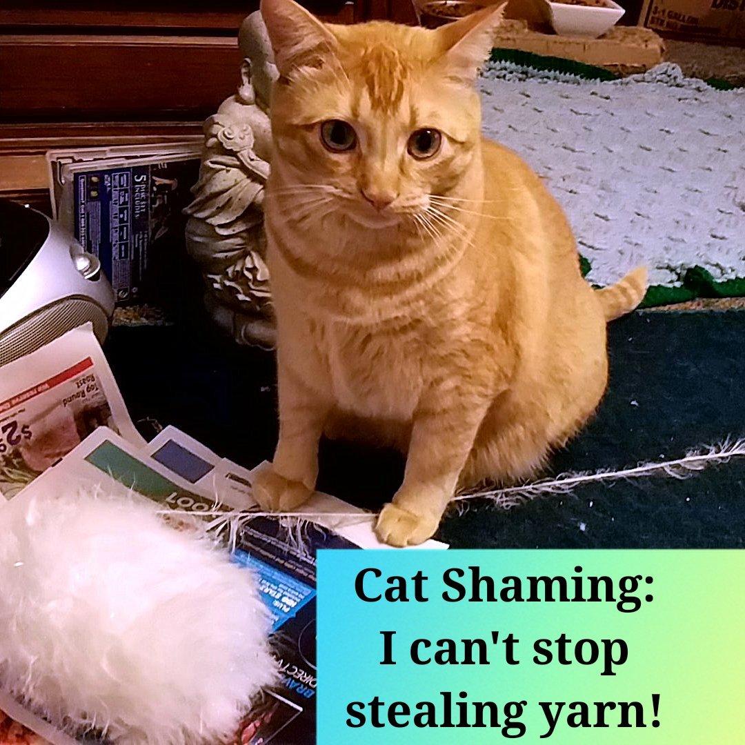 cat-shaming-74