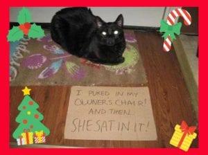 cat-shaming-77