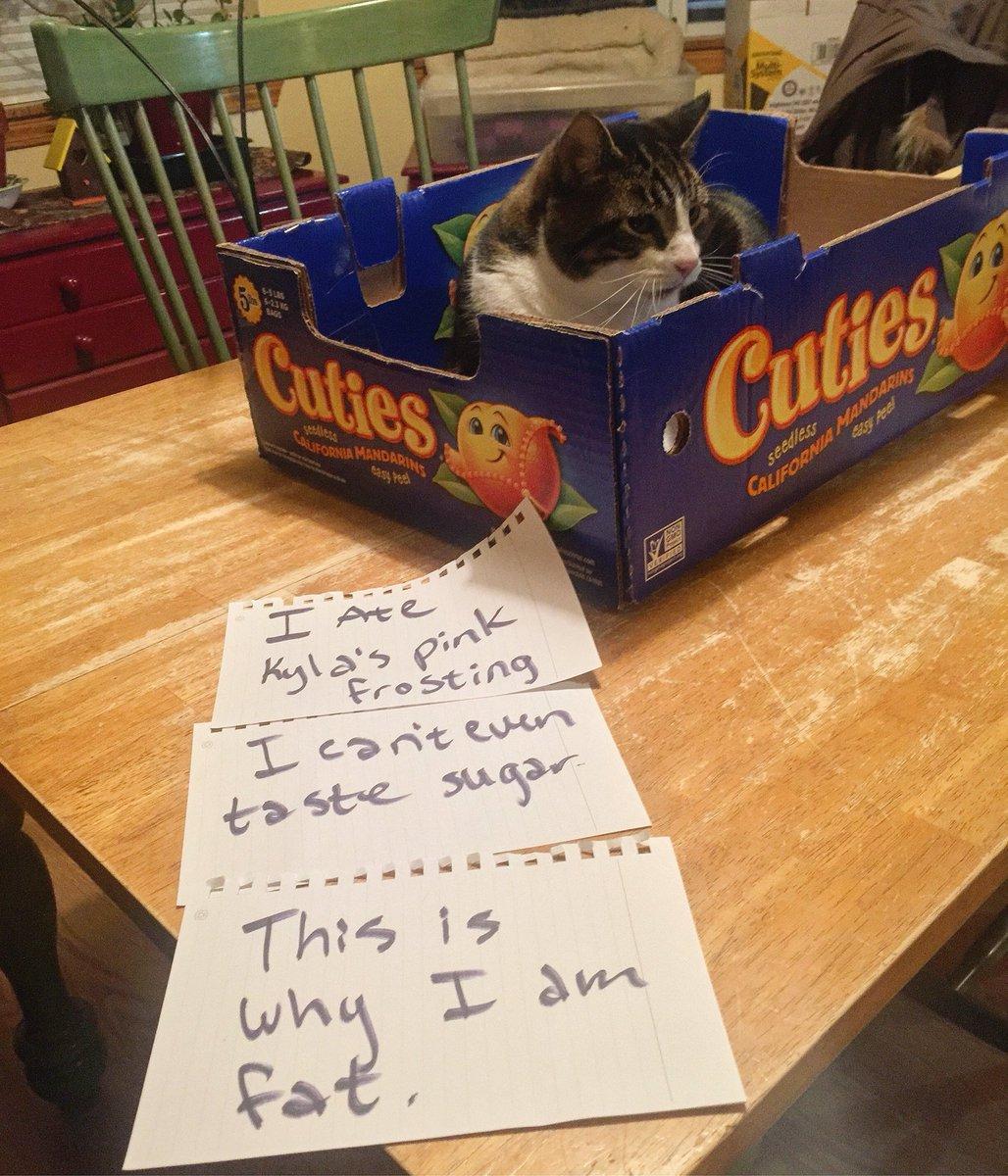cat-shaming-78