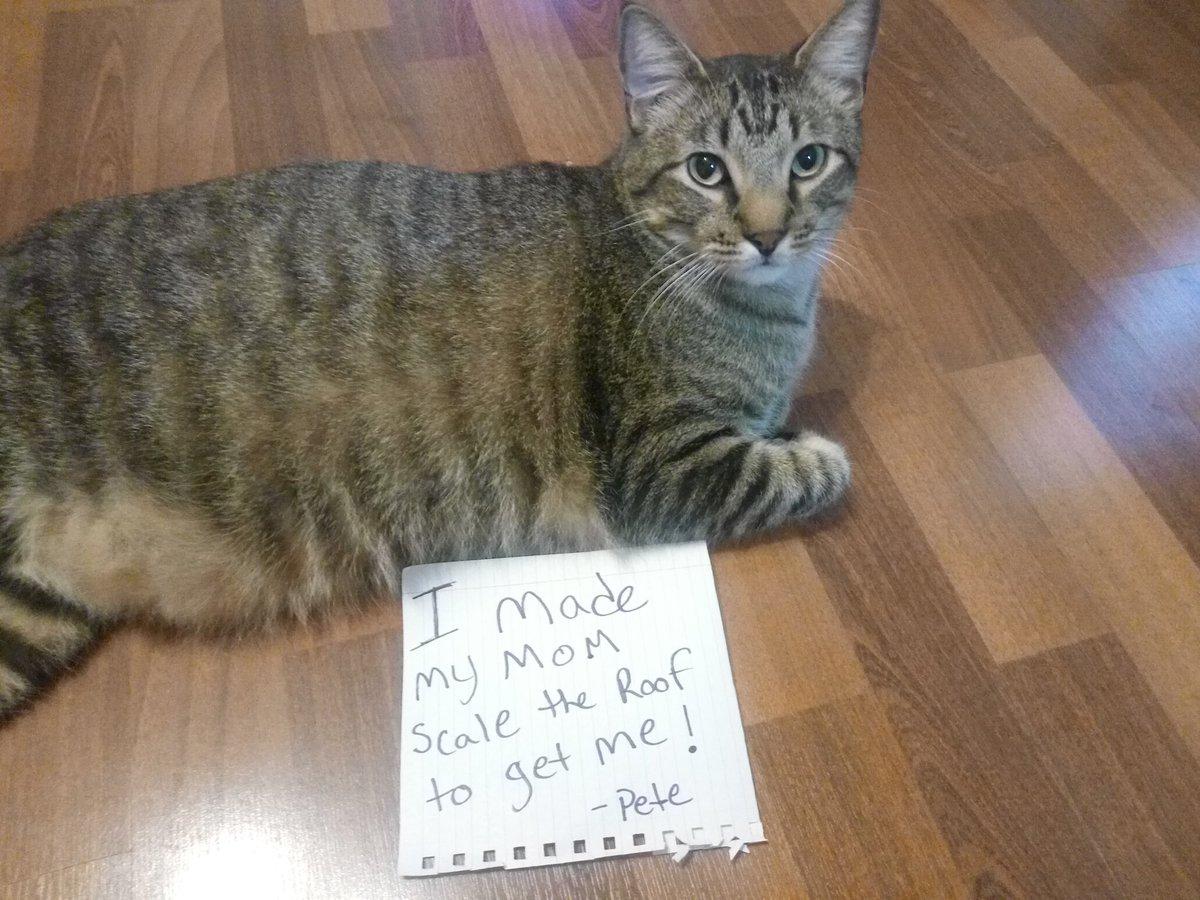 cat-shaming-8