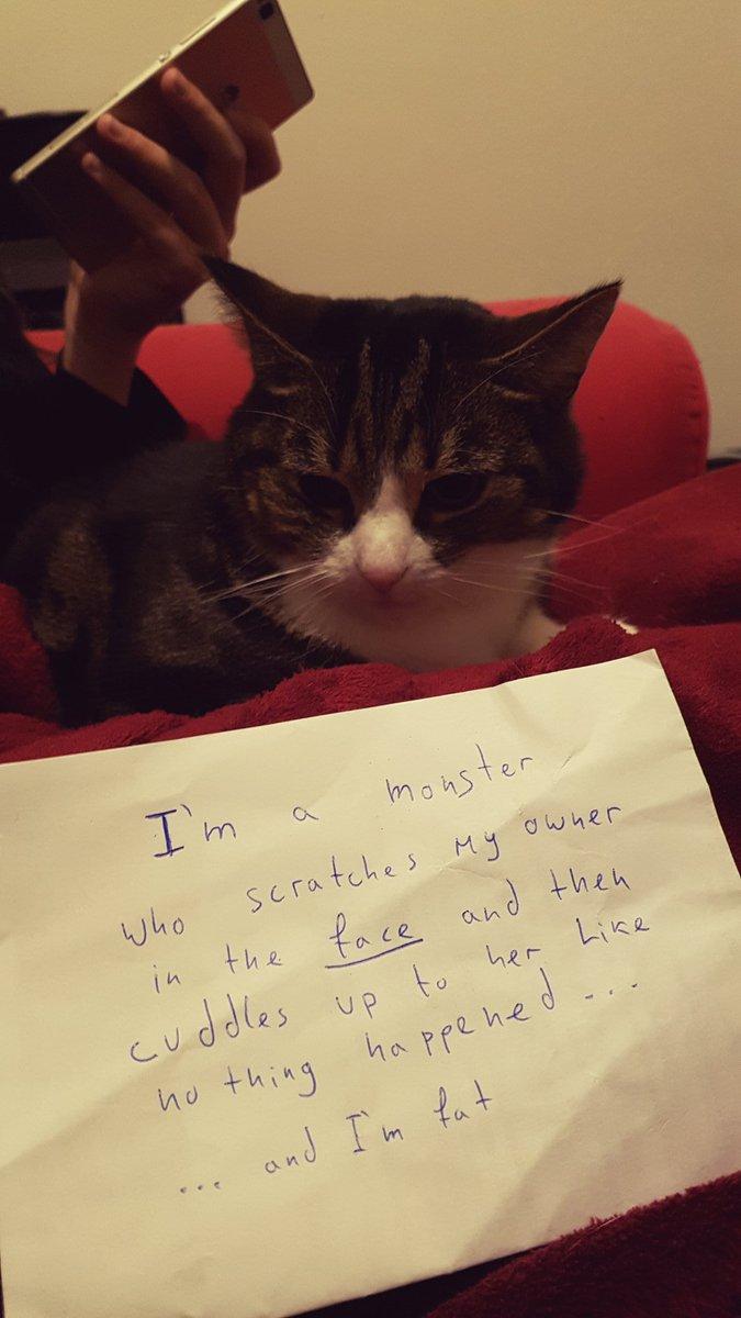 cat-shaming-80
