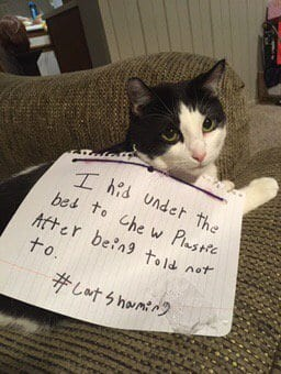 cat-shaming-84