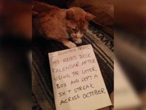 cat-shaming-85