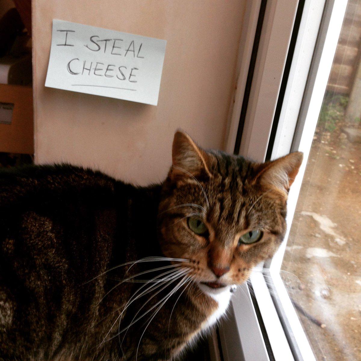 cat-shaming-87