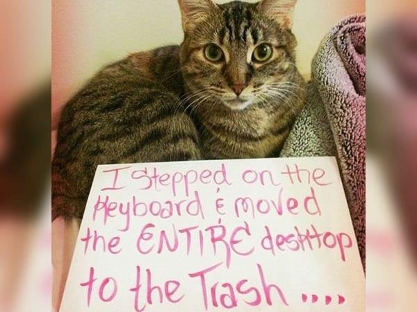 cat-shaming-88
