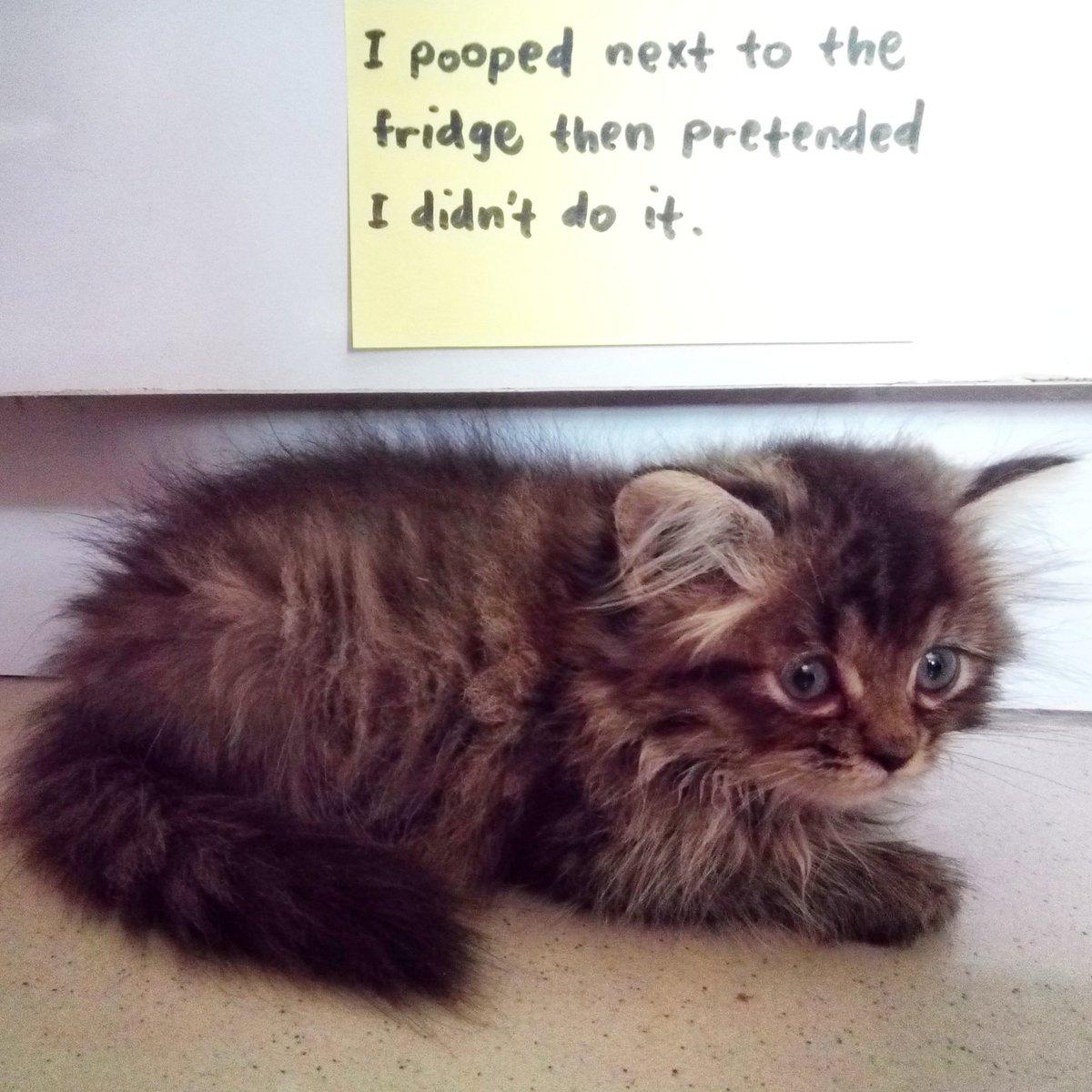 cat-shaming-89
