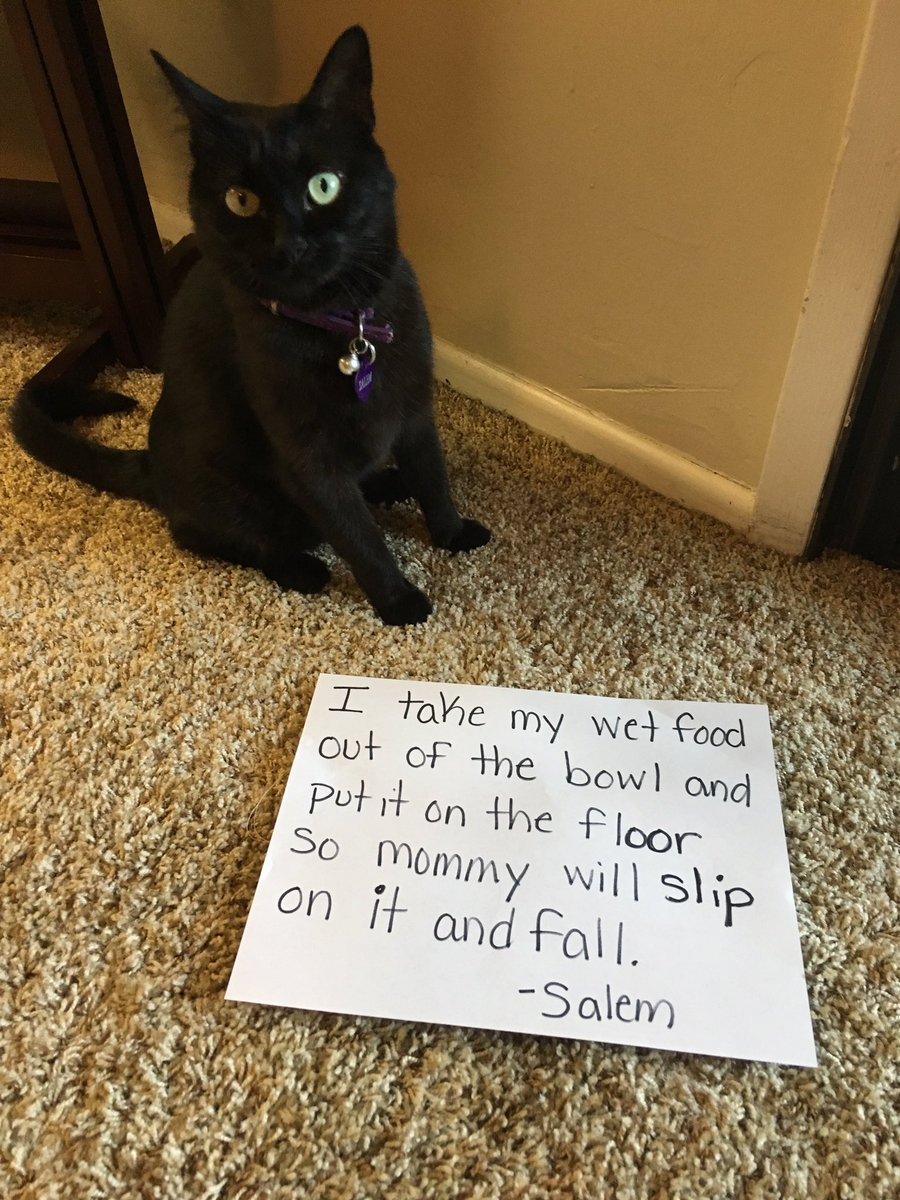 cat-shaming-9