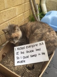 cat-shaming-90