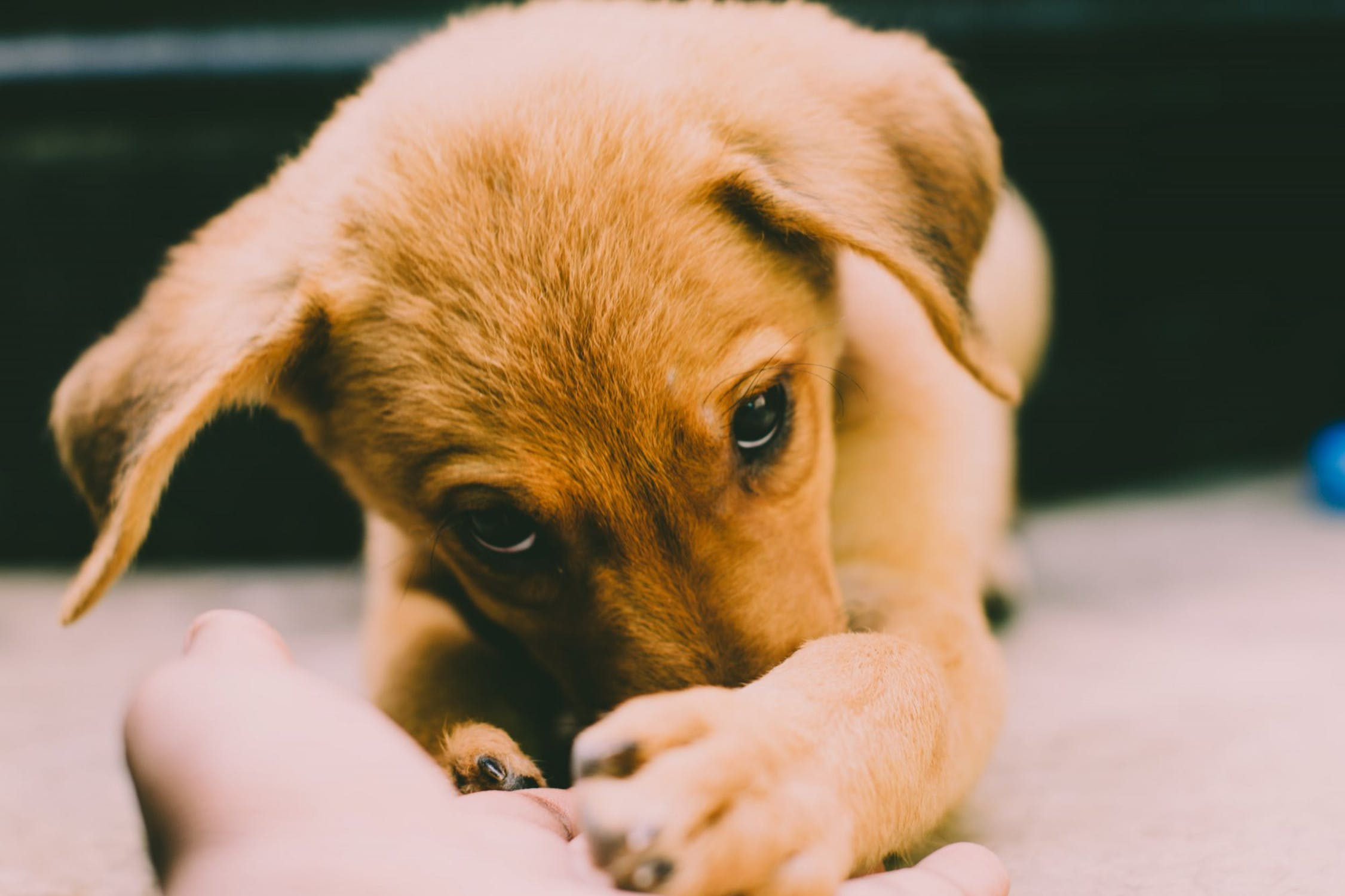 puppy-picture-42