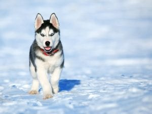 puppy-picture-43