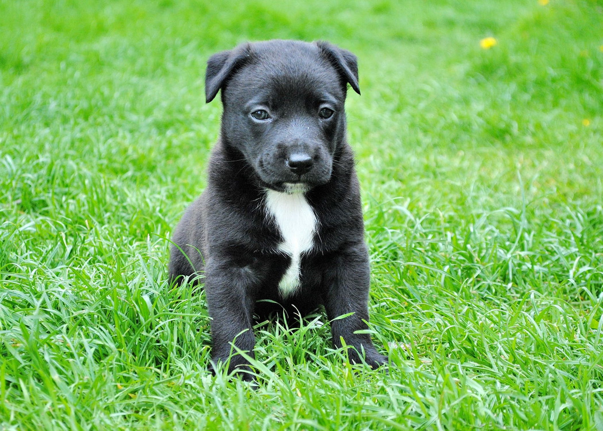 puppy-picture-44