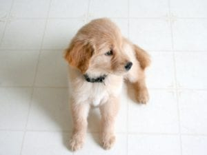 puppy-picture-46