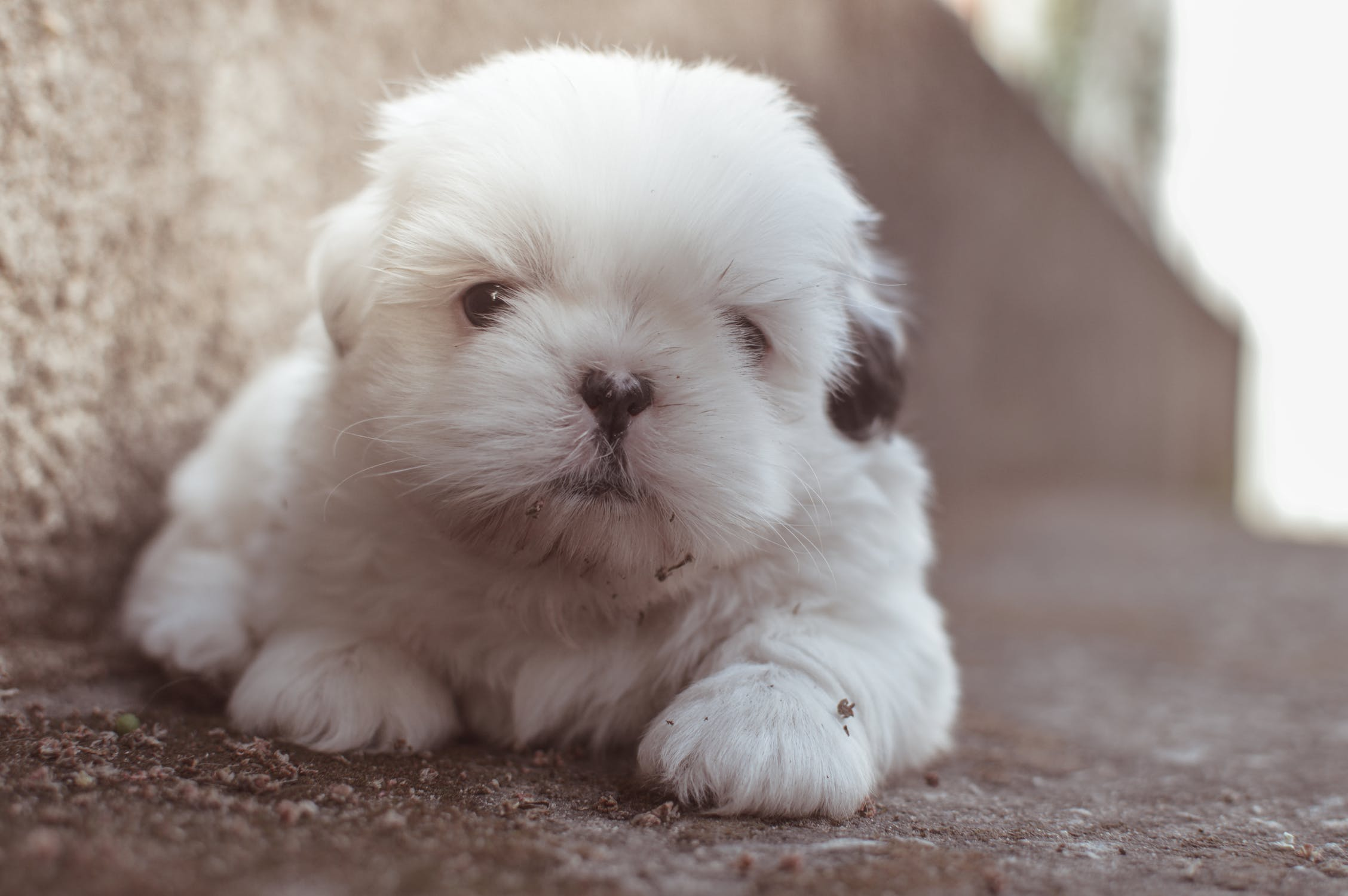 puppy-picture-47