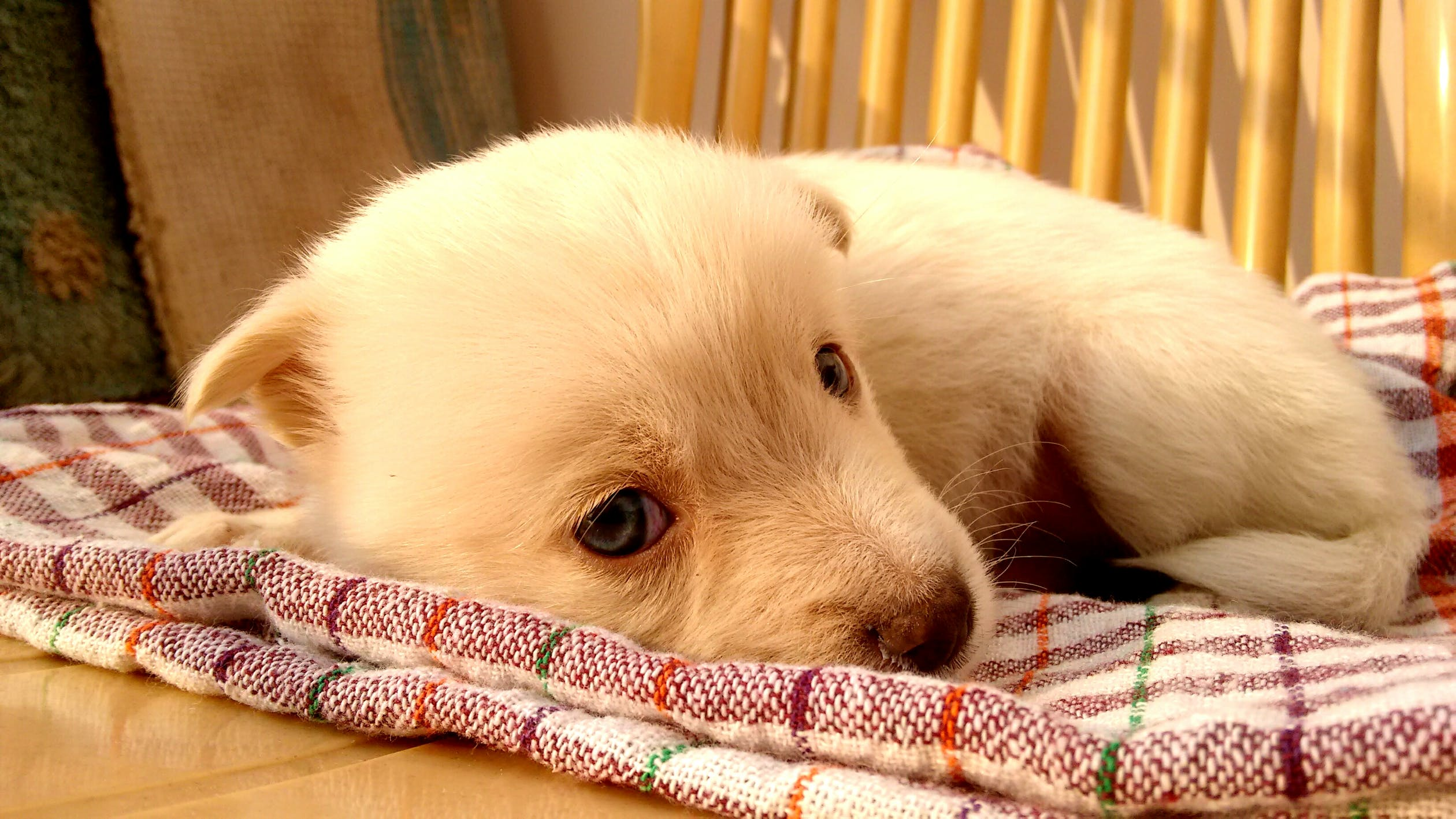 puppy-picture-49