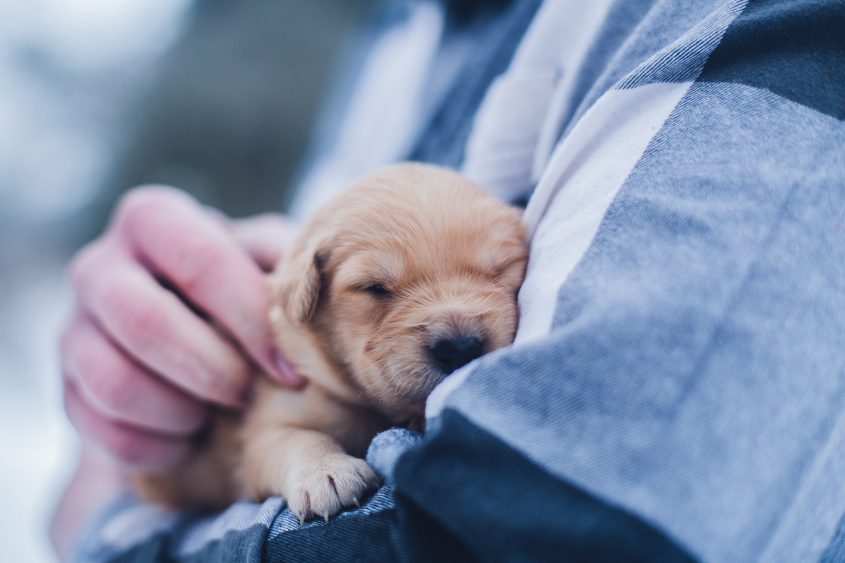 puppy-picture-52