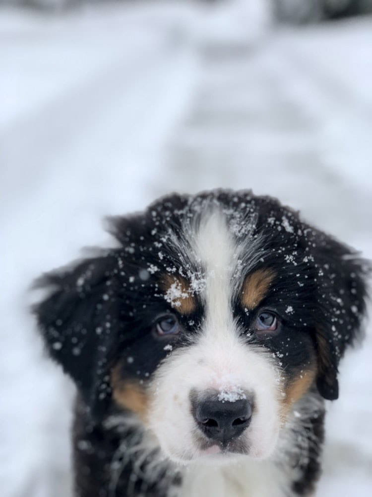 puppy-picture-54