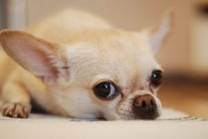 puppy-picture-57