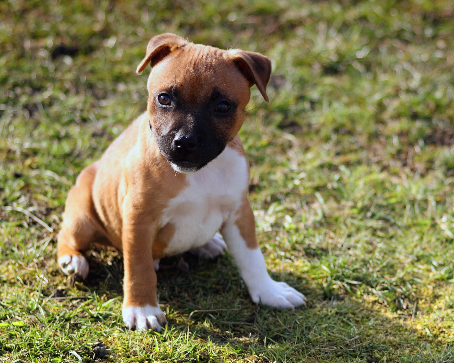 puppy-picture-59