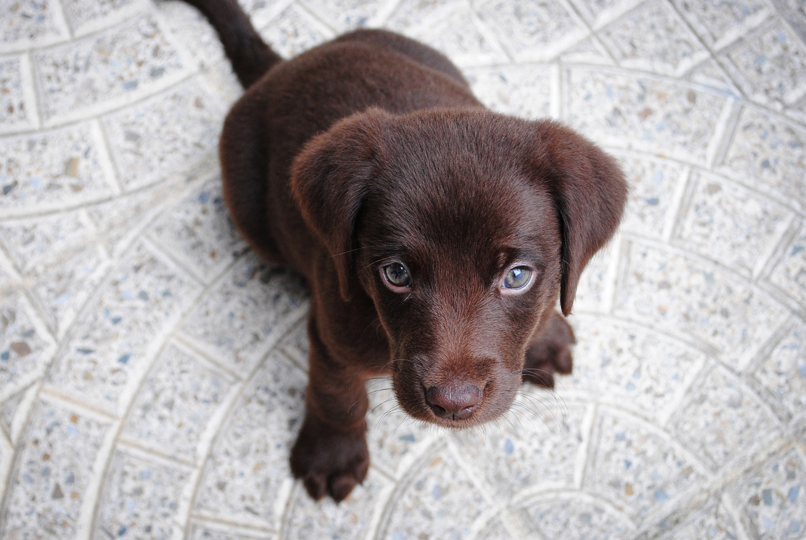 puppy-picture-63