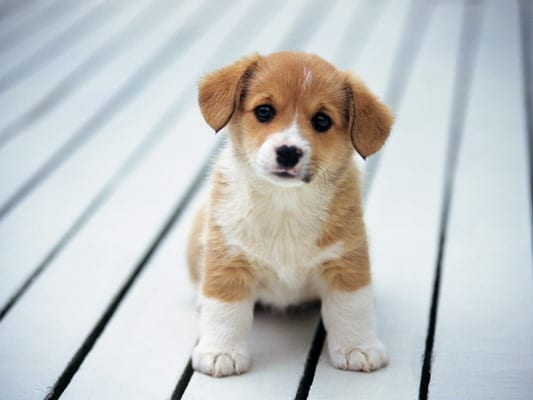 puppy-picture-67