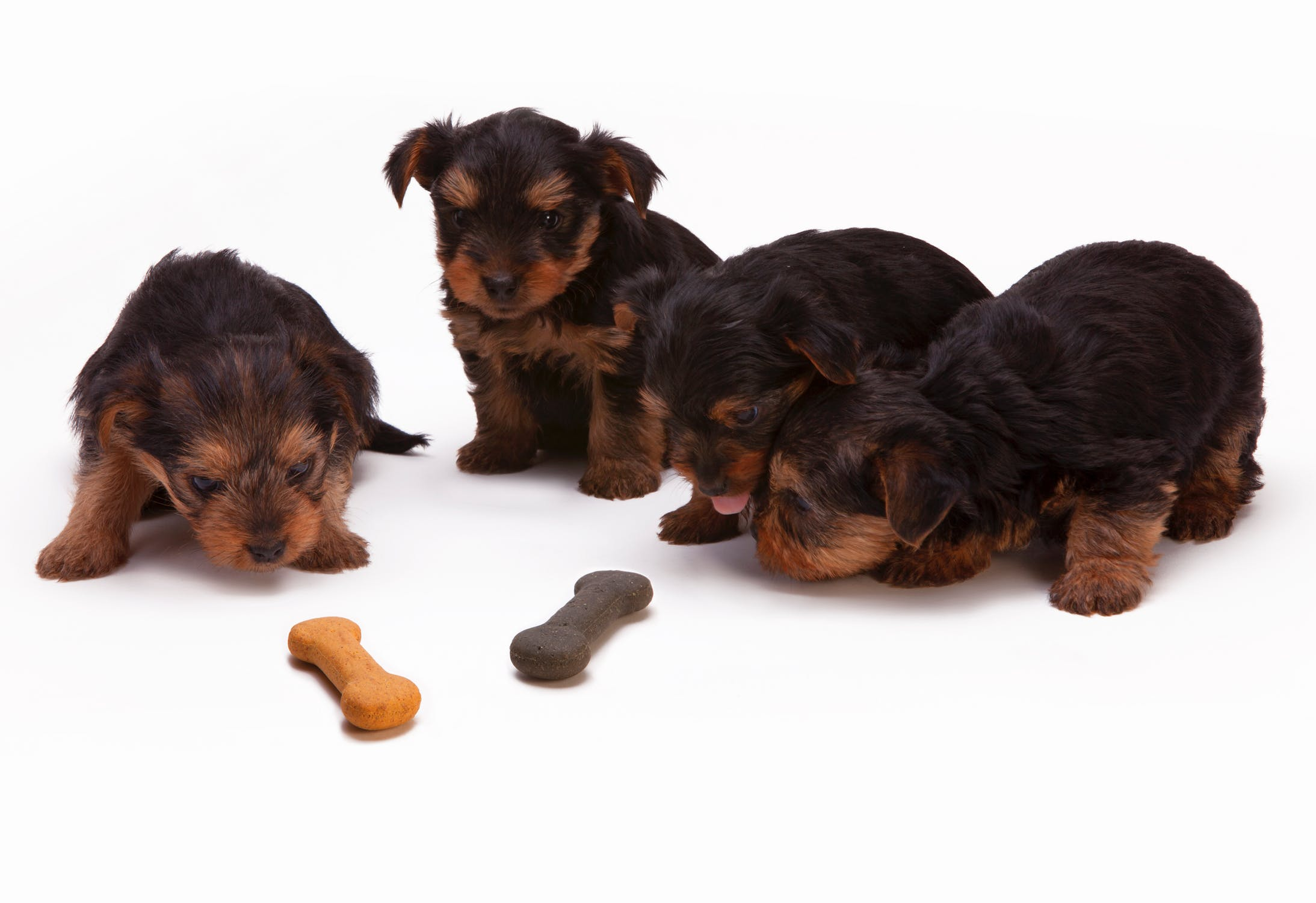 puppy-picture-70