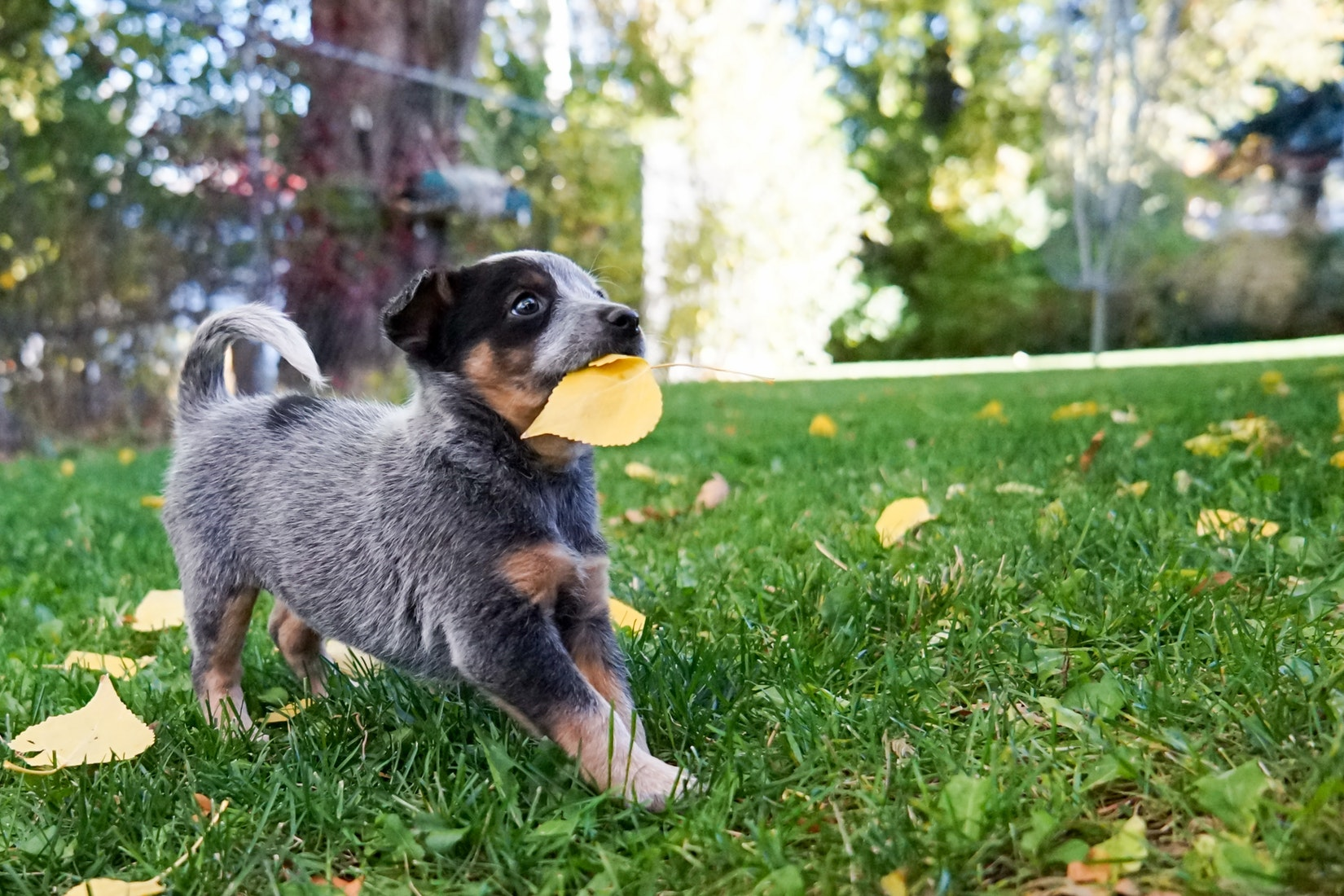 puppy-picture-75